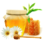 Phoenicia Wildflower Honey with Comb Petekli Yabani Cicek Bali Kanada Toronto Canada United States Ottawa Montreal Quebec Laval Vancouver Edmonton New York California Mississauga Kitchener Hamilton Halifax New York California Niagara Falls